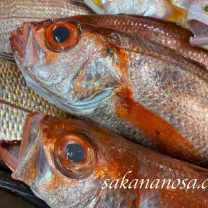 のど黒(赤むつ) 炙りが最高に美味しい日本海人気No.1の高級魚 秋冬の魚介類
