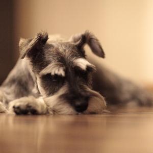 3人目を産むか犬を飼うか考えて犬を飼うことにしました