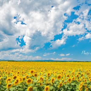 今日は真夏日になりそうな予報!