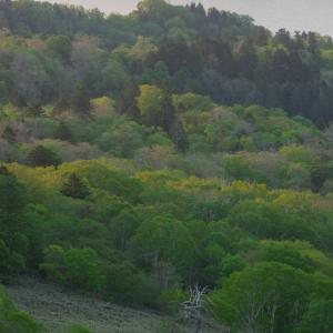 屈斜路湖畔の森が輝きを増す時間!