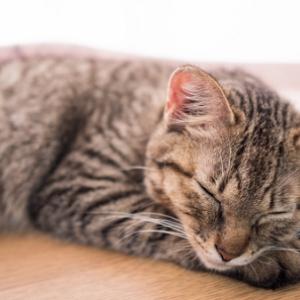 ダイエット 睡眠 運動