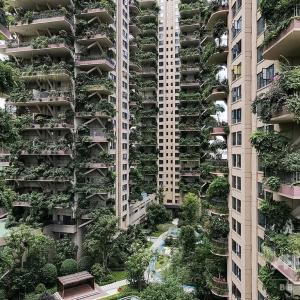 【中国】「都会の楽園」のはずが…緑あふれる集合住宅、蚊の来襲でほぼ無人に