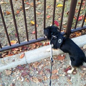 犬の無麻酔スケーリング【帝塚山ハウンドカム】と【万代池公園】
