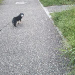西河原公園散歩②