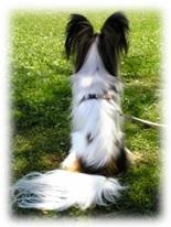 バルコニーと犬