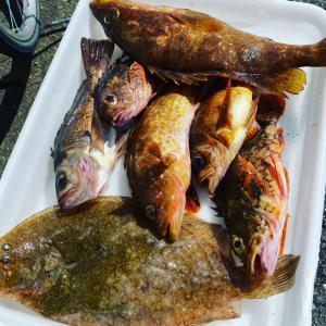 早起きして釣りに。いろんな魚が釣れる大満足な1日