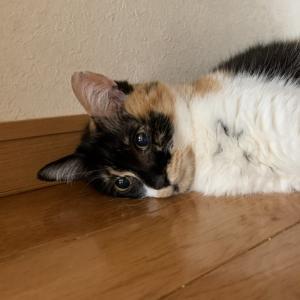 猫の夏バテ〜暑さ対策について〜