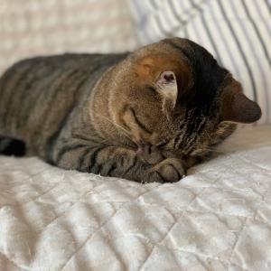 ねこらいふ|猫はなぜ寝ている時間が長いのか?