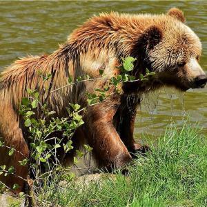 クマを愛し、クマに殺された活動家2️⃣