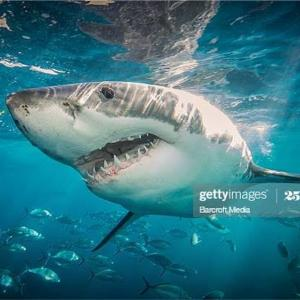 ニュージャージーサメ襲撃事件。ジョーズのモデルになった実際の事件
