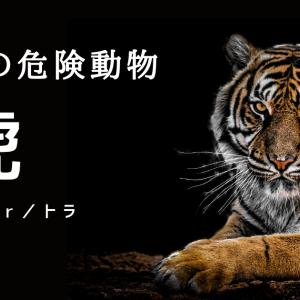 【虎】森にひそむ金色の危険。獰猛な陸生動物の生態。