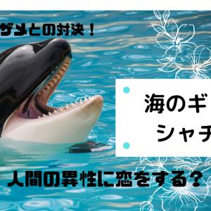 海の最強捕食者【シャチ】はどんな生き物/人間の異性に恋をする?
