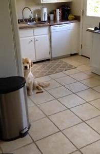 犬「僕は何もしていません」表情でやらかしたのがバレバレな犬w