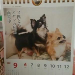 わんこカレンダー