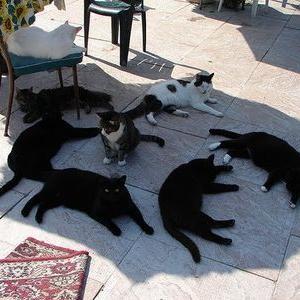 【不思議】猫獄山