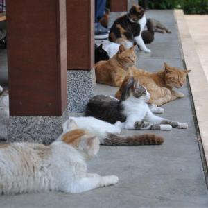 【東京】野良猫が多い寺