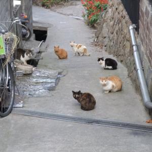 【不思議】猫会議で猫の会話を聞いてしまった