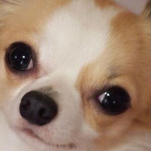 【ホラー】犬を飼っていたが、その犬に恨まれていた