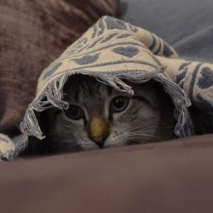 【神隠し】消えた子猫