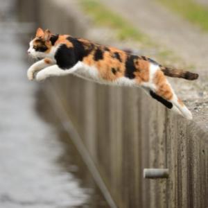 【不思議】うちの猫の不思議な話を紹介する