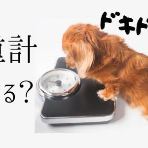 毎日、体重計にのっていますか?