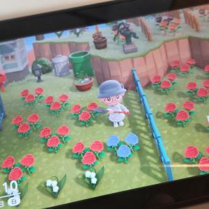 ゲームあつ森・青いバラが咲いた!