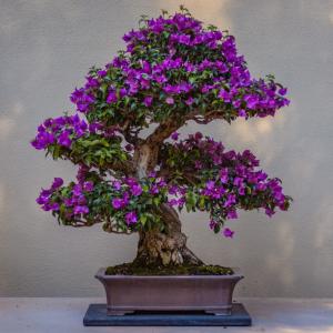 【BONSAI】大自然が盆栽サイズ。フィリピン風盆栽で、心だけでも旅行気分