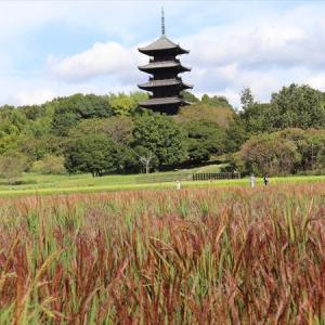 備中国分寺と赤米