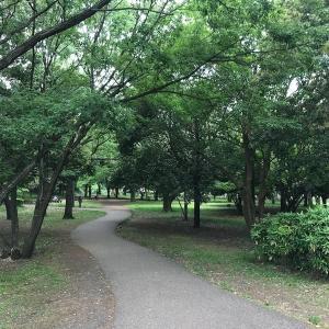 神奈川県 大和市 ふれあいの森  買い物ついでに【森林浴をしよう!】