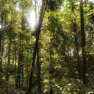 横浜市の森 ウイトリッヒの森【2019年5月と2021年1月を比較】