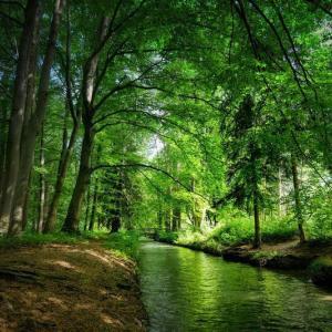 森林浴の効果はストレスに効くだけじゃない!【7つのチカラ】