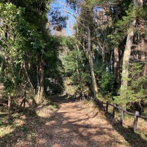 深見歴史の森で森林浴【無料の駐車場はスポーツ広場】