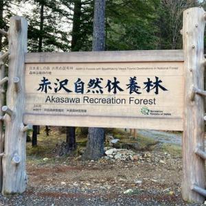 赤沢自然休養林は森林浴発祥の地【ネズコの木がある!?】