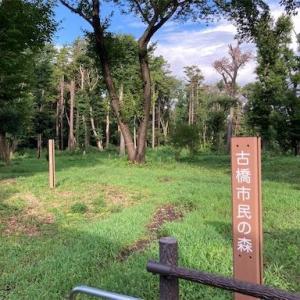 【横浜市】古橋市民の森レビュー【近くの駐車場もご紹介】