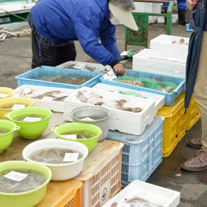 雑賀崎漁港の鮮魚直接販売は安くて新鮮。超お買い得です。