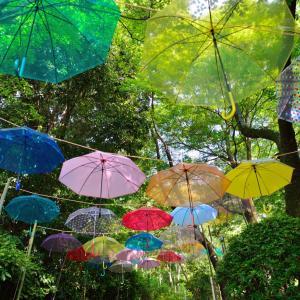 長野公園(奥河内さくら公園)の概要とあじさい等の見所を紹介
