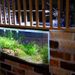念願の60cm水槽を立ち上げ!キッチンのDIY改造・水槽周辺設備