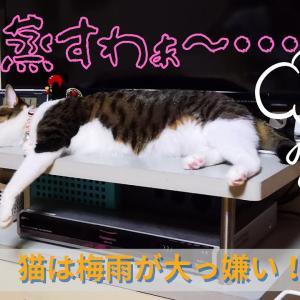 猫も苦手な梅雨時期のイヤ~な湿気。その理由と快適に過ごす対処法