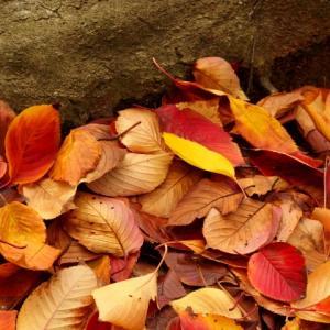 ザリガニに落ち葉をあげるのを超お勧めします!
