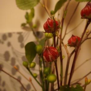 秋の花とクチポール考察