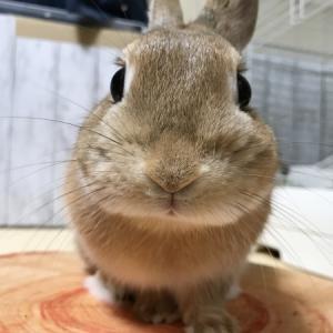私のうさぎ展にパネル写真展示で参加!大阪でうさぎだらけのイベントがあるよ!