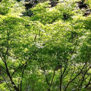 新緑季節って最高です。今だって忘れられない心地よさをたっぷり浴びよう