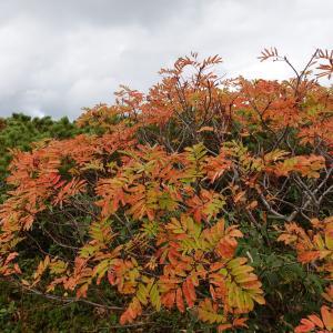 大雪山旭岳の紅葉が見ごろです(2020年)