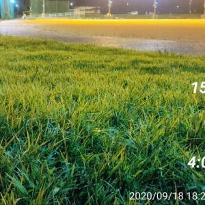練習-ペース走15km-2020/09/18-個人的にクラウチングスタートが速く走るコツな気がする