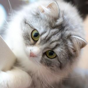 猫を飼い始める前に最低限揃えておきたい!おすすめ商品5選を紹介!