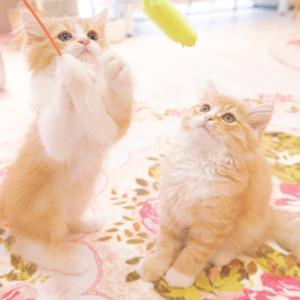 猫と風水の関係を紹介します!猫を飼うと人の運気が上がる!?