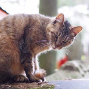 猫が木登りをする理由とは?猫はなぜ高い所が好きなの?