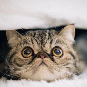 猫が雷でパニックに!【雷を怖がる理由と対処法をご紹介】