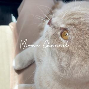 Youtube動画紹介 車の中では人格(猫格?)が変わる猫