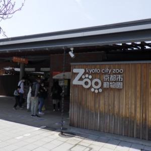 【日本2番目の動物園】京都市動物園を見学。動物福祉への取り組みに注目